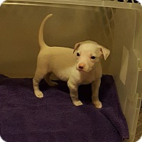 Adopt A Pet :: Sugar - Byhalia, MS