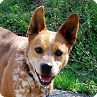 Adopt A Pet :: Boo Boo - Salem, WV