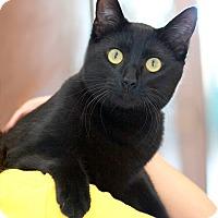 Adopt A Pet :: Cruz - Coronado, CA