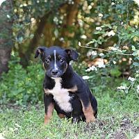 Adopt A Pet :: Sanford - Groton, MA