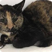 Adopt A Pet :: Mercury - Orleans, VT