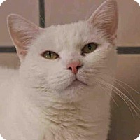 Adopt A Pet :: BEATRICE - Fort Wayne, IN