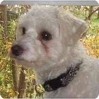Adopt A Pet :: Frisou - Rigaud, QC