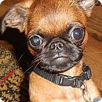Adopt A Pet :: JACK - ADOPTION PENDING - Little Rock, AR