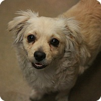 Adopt A Pet :: Mitch - Canoga Park, CA