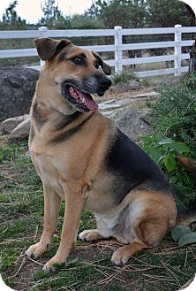 German Shepherd Dog Mix Dog for adoption in Mountain Center, California - Ripley