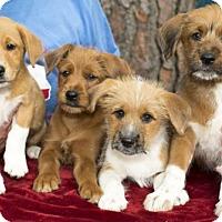 Adopt A Pet :: Misty Boy Babies--N - Santa Fe, TX