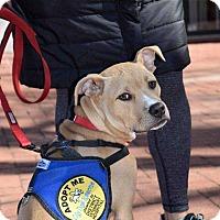 Adopt A Pet :: Levi (Has Application) - Washington, DC