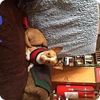 Adopt A Pet :: Paul - Barriere, BC