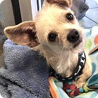 Adopt A Pet :: Monty - San Antonio, TX