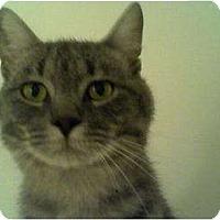 Adopt A Pet :: William - Portland, ME