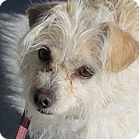 Adopt A Pet :: Charmaine - Scottsdale, AZ