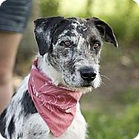 Adopt A Pet :: Kate- local! - East Hartford, CT