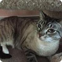 Adopt A Pet :: Cheyenne - East Hanover, NJ