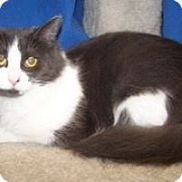 Adopt A Pet :: Marcy - Colorado Springs, CO