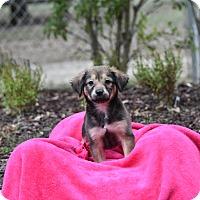 Adopt A Pet :: meadow - Groton, MA