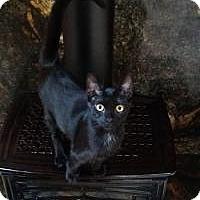 Adopt A Pet :: Esmerelda - Santa Cruz, CA