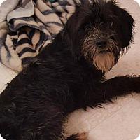 Adopt A Pet :: Dover - Hope Mills, NC
