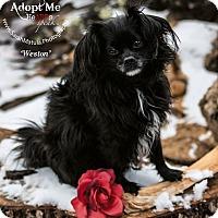 Adopt A Pet :: Weston - New Milford, CT