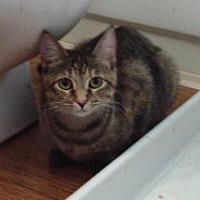 Adopt A Pet :: Ree - Houston, TX