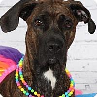 Adopt A Pet :: Ava - Titusville, FL