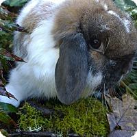 Adopt A Pet :: Faline - Seattle c/o Kingston 98346/ Washington State, WA