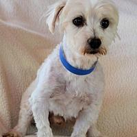 Adopt A Pet :: Buttons - Pueblo, CO