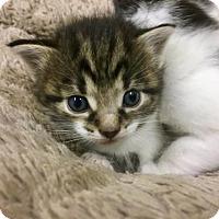 Adopt A Pet :: Vinny-Adoption Pending - Northeast, OH