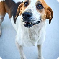 Adopt A Pet :: Bobby - Prince George, VA
