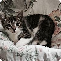Adopt A Pet :: Vanna - Speonk, NY