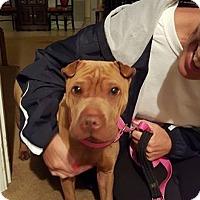 Adopt A Pet :: Bonnie in FL - Mira Loma, CA