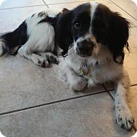 Adopt A Pet :: Freckles - Corona, CA