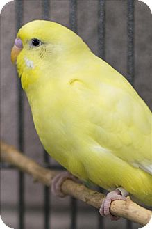 Parakeet - Other for adoption in Elizabeth, Colorado - Wilma