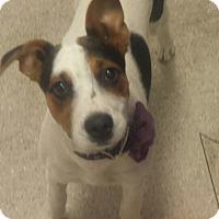 Adopt A Pet :: Nelly - Scottsdale, AZ