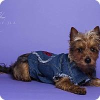 Adopt A Pet :: Henry - Baton Rouge, LA