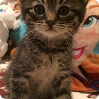 Adopt A Pet :: Thorne - River Edge, NJ