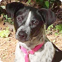 Adopt A Pet :: Guinevere - CUMMING, GA