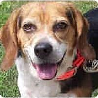 Adopt A Pet :: Macie - Indianapolis, IN