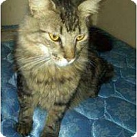 Adopt A Pet :: Natalie - Phoenix, AZ