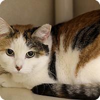 Adopt A Pet :: Gin Fizz - Chicago, IL