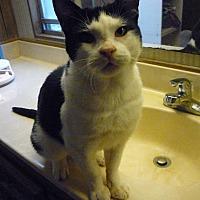 Adopt A Pet :: Bojo - Salem, OR