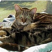 Adopt A Pet :: Margarette - Boca Raton, FL