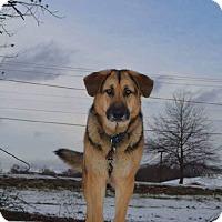 Adopt A Pet :: McKenna - Brattleboro, VT