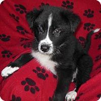 Adopt A Pet :: Hoagie - Normandy, TN