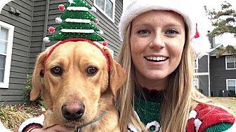 Labrador Retriever Mix Dog for adoption in Eden Prairie, Minnesota - Remy