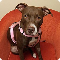 Hound (Unknown Type) Mix Dog for adoption in Jacksonville, Florida - Daisy