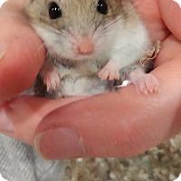 Adopt A Pet :: Eggnog - Bensalem, PA