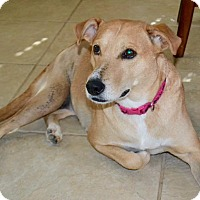 Adopt A Pet :: Missy - Aubrey, TX