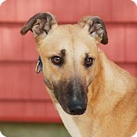 Adopt A Pet :: Sal - Ware, MA