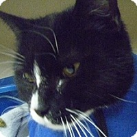 Adopt A Pet :: Evie - Hamburg, NY